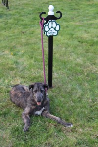 Pet Parking Post with Wolfhound