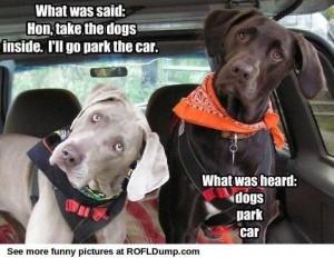 dog park car