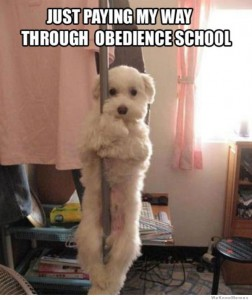 just-paying-my-way-through-obedience-school