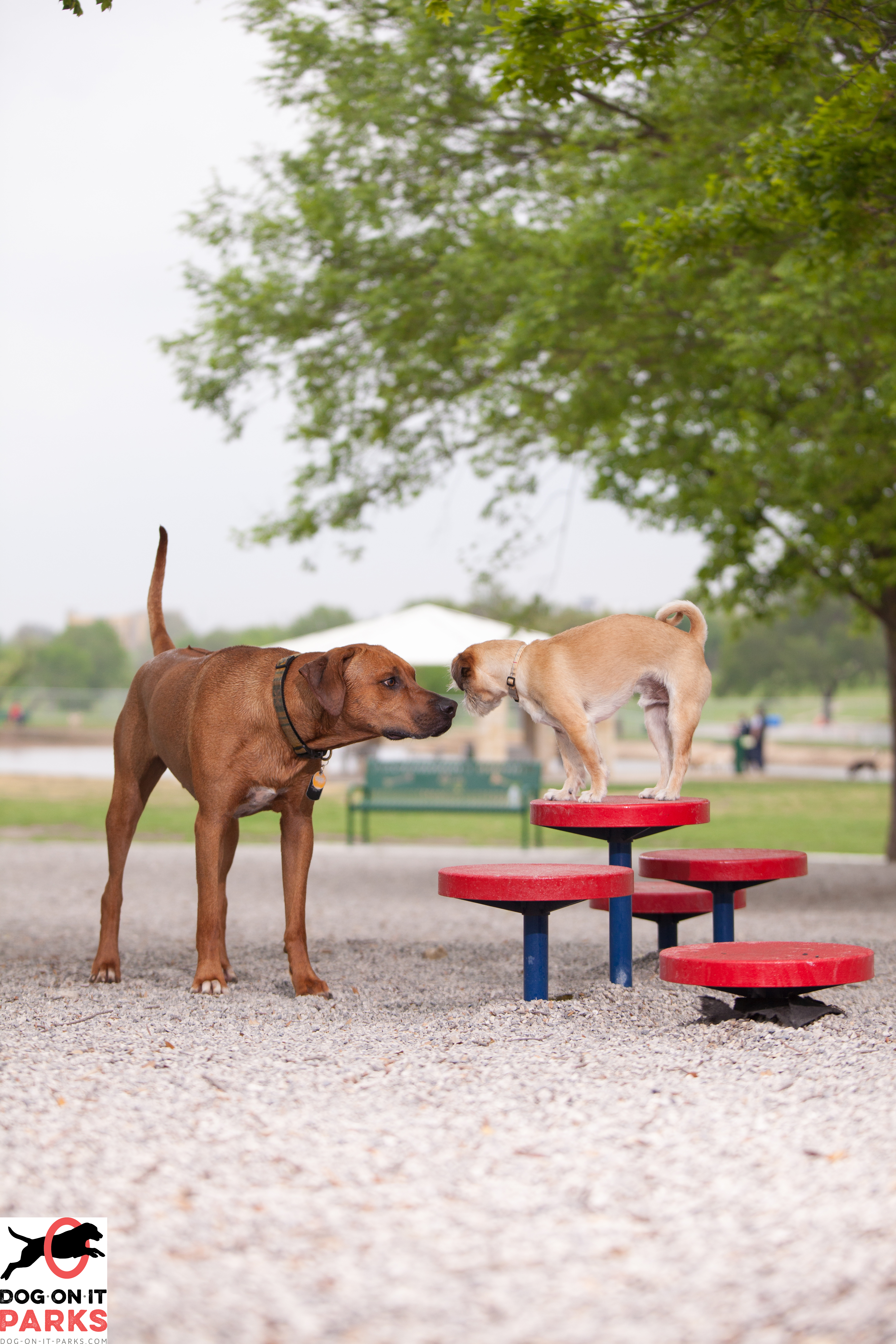 Dog Park Etiquette The Do S And Don Ts Dog On It Parks Blog
