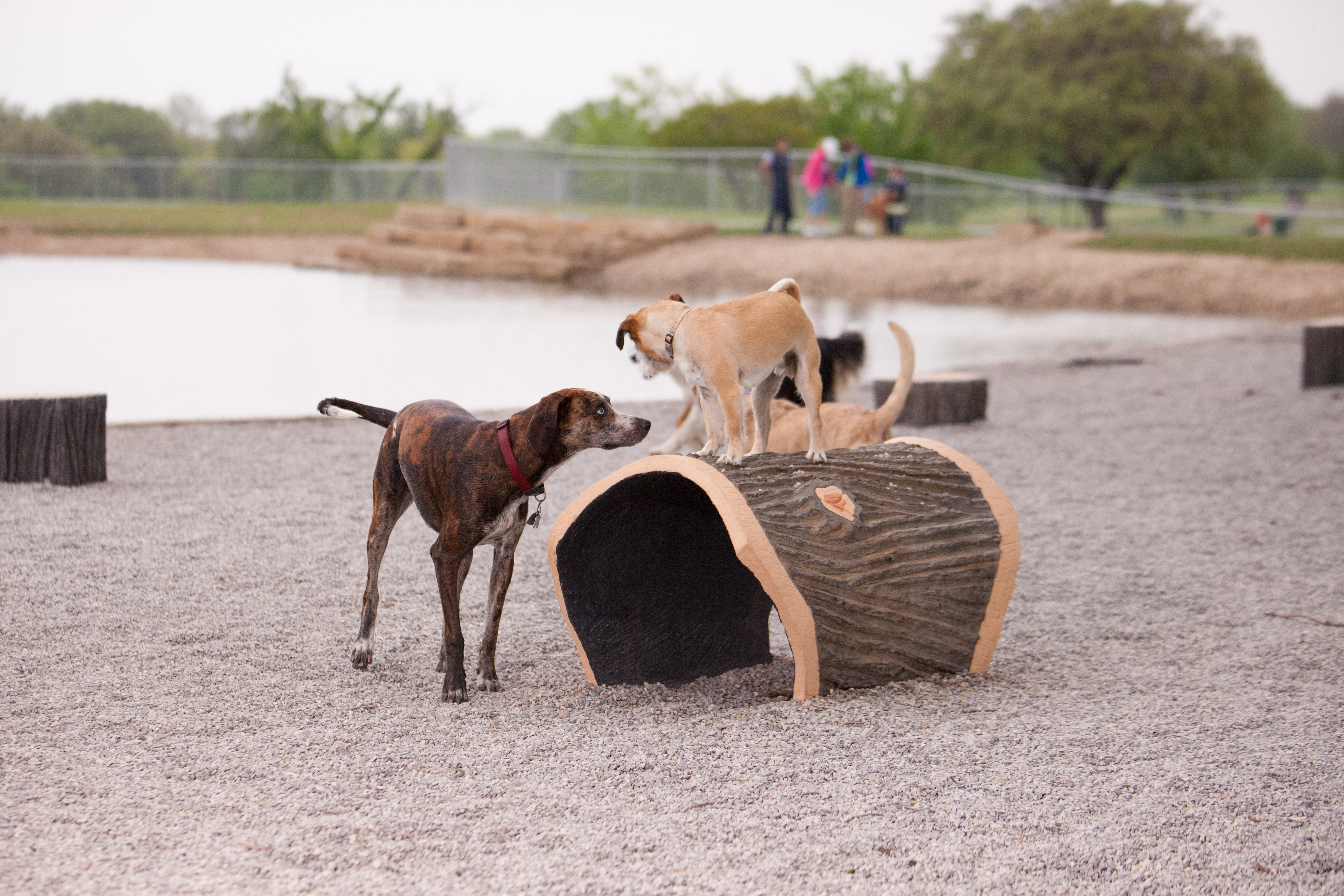 c73af022c9e Hopefully these tips will make the dog park a happier place for both you  and your pup. Woof!