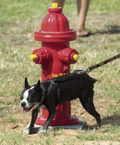 Porterville Dog Park