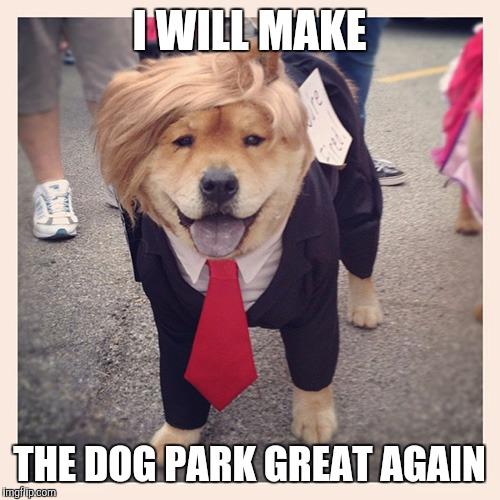 4ba3851473b Grants: Help Make Your Dog Park Dreams Come True!