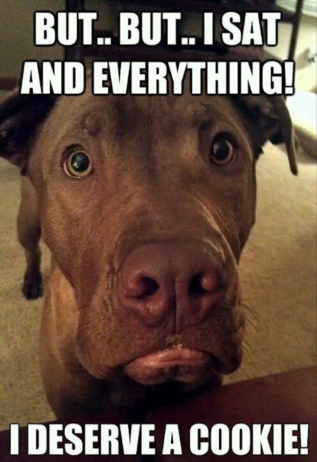 Whos A Good Dog Positive Reinforcement Training