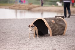 Terrier Tunnel