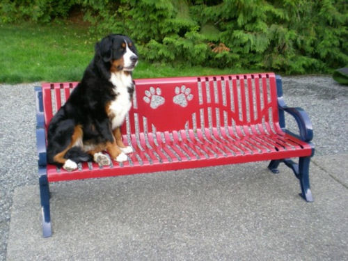 Deluxe Dog Paw Bench