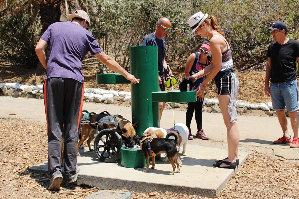 Pedestal Bottle Filler With Barrier Free Fountain Amp Pet Bowl