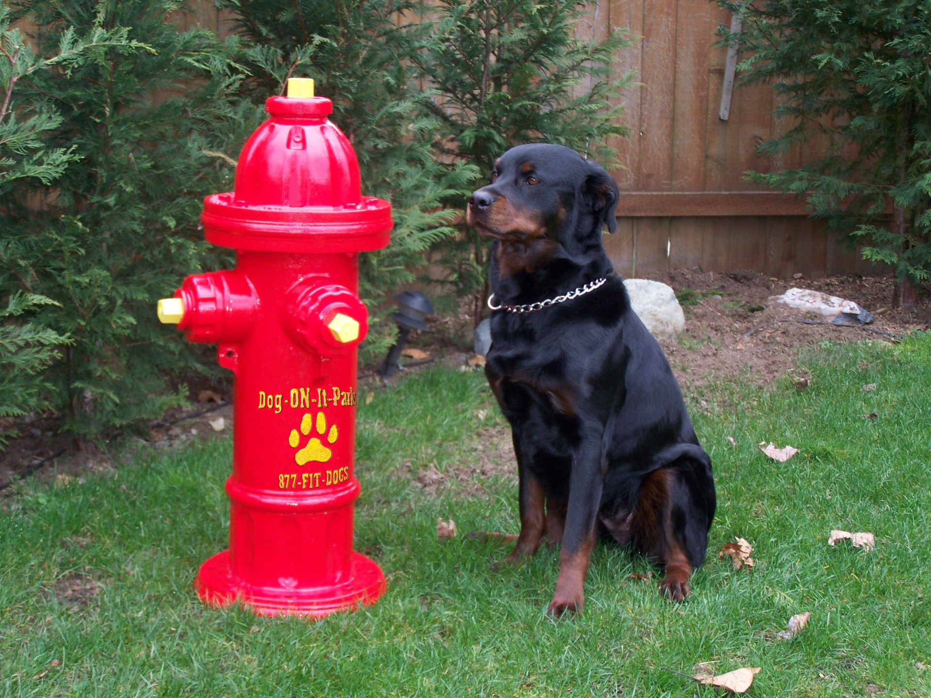 Fire Hydrants For Dog Parks
