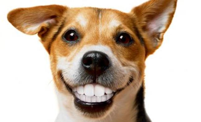 Minty Fresh Tips And Tricks For Cleaning Your Dogs Teeth Dog On