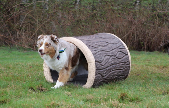 NatureDog™ Terrier Tunnel