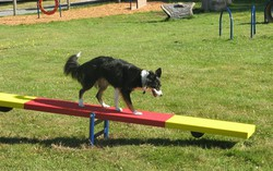 Classic Agility Equipment Teeter Totter