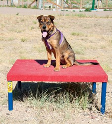 "Classic Agility Equipment Wait Table, 8""-16"" high"