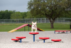 Agility Walk (Set of 5)