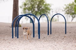 Hound Hoops™ (Set of 5)