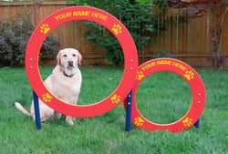 Classic Agility Equipment Double Hoop Jump