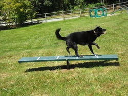 Canine Courtyard™ Scottie Seesaw