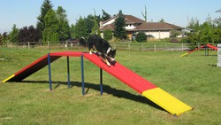 Agility Equipment Dog Walk Ramp
