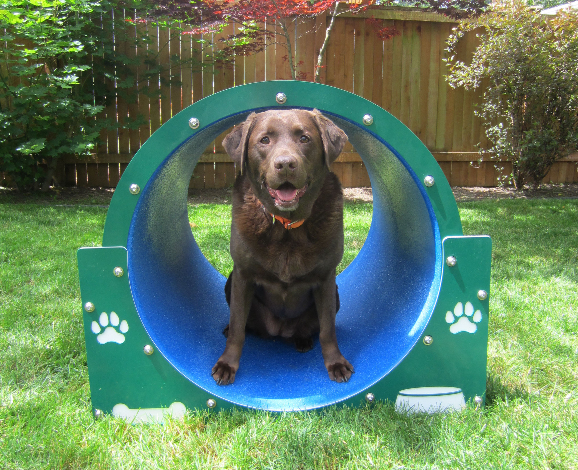 Bow wow barrel for Barrel dog house designs